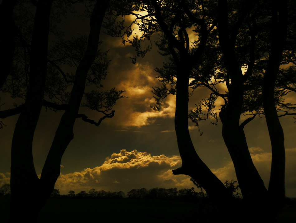 Landscape photograph of The Dark Hedges, Northern Ireland by photographer Stephen S T Bradley - photo 2389 photo icon.