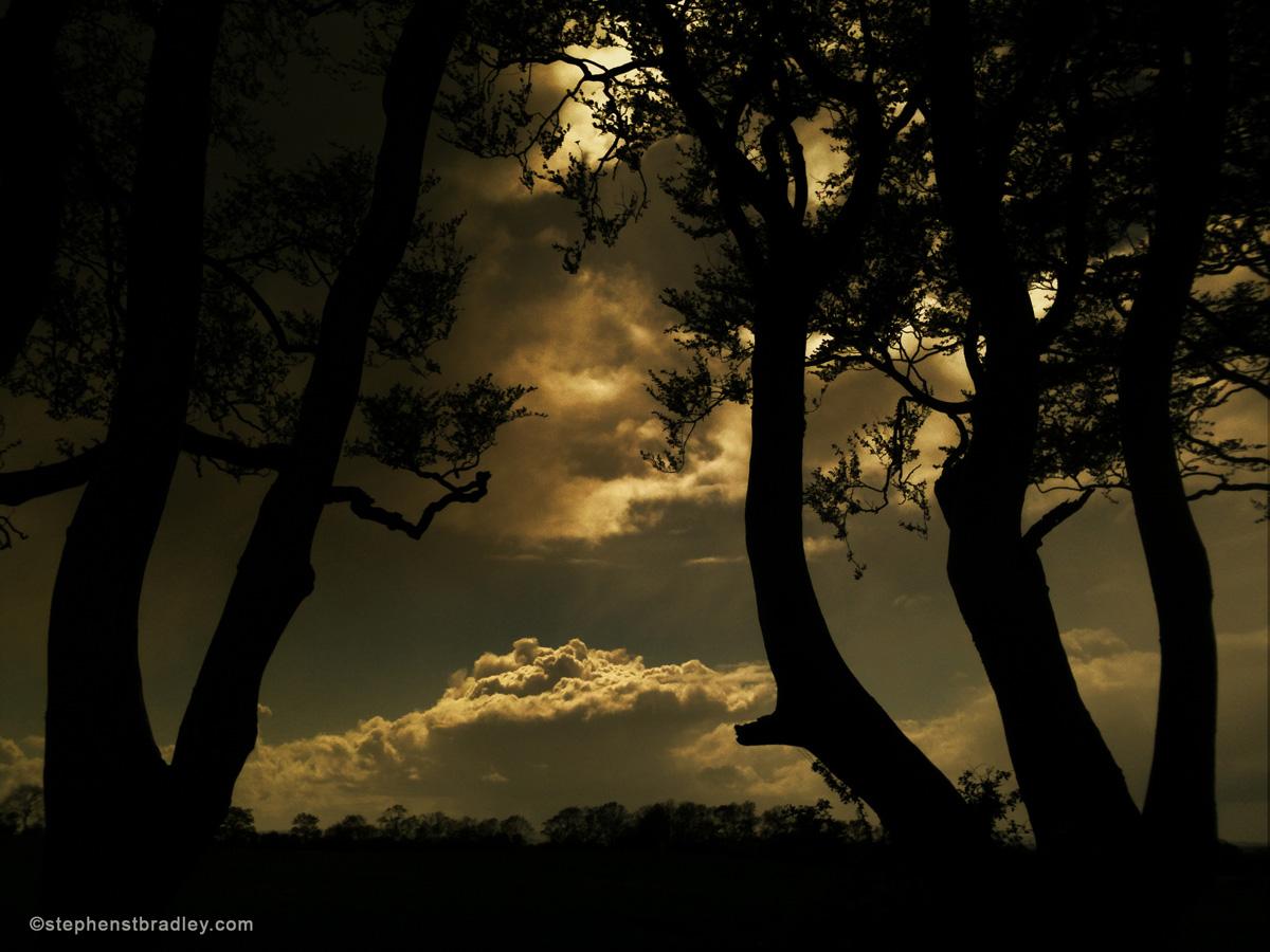 Commercial Photographer Atlanta landscape photograph of The Dark Hedges, Northern Ireland - photo 2389.